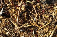 Текстура травы сухой травы Брайна Стоковые Фотографии RF