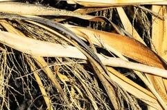 Текстура травы сухой травы Брайна Стоковое Изображение RF