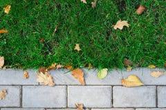 Текстура травы с границей, дорожкой outdoors Стоковые Изображения