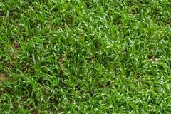 Текстура травы Стоковое фото RF