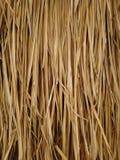 Текстура травы Vetiver стоковое изображение rf