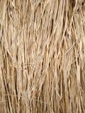 Текстура травы Vetiver стоковые изображения