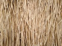 Текстура травы Vetiver стоковая фотография