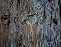 Текстура треснутой старой краски на доске стоковое фото