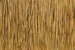 текстура тросточки сухая Стоковые Изображения RF
