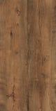 Текстура дуба Стоковые Фото