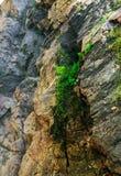 Текстура утеса взгляда зеленая Стоковые Фото
