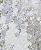 Текстура утеса каменная Стоковая Фотография RF