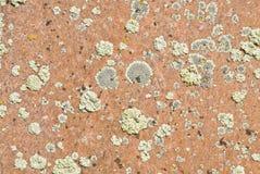 текстура утеса лишайника Стоковая Фотография RF