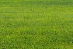 текстура фото естественного парка зеленого цвета травы детей предпосылки принятая публикой элемент конструкции рождества колокола Стоковые Фотографии RF