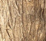 Текстура хобота сосны Стоковое Фото
