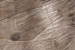 Текстура хобота Стоковая Фотография RF