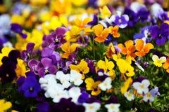 Текстура цветка Стоковые Изображения RF
