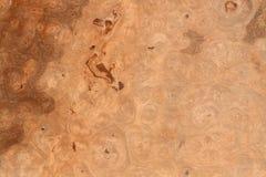 Текстура ценных пород дерева Стоковое Изображение