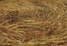 Текстура циркуляра сена Стоковые Изображения