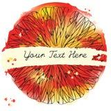 Текстура цитрусовых фруктов Рамка эскиза Ручка чернил на красном цвете акварели Стоковое фото RF