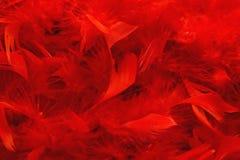 текстура шарфа пера горжетки красная Стоковые Фото
