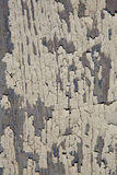 текстура шелушения краски предпосылки стоковое изображение rf