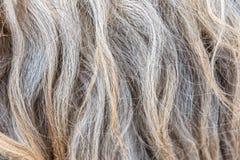 Текстура шерстей овец Стоковые Изображения