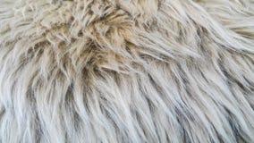 Текстура шерстей Стоковое Изображение RF