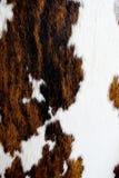 текстура шерсти коровы Стоковое фото RF