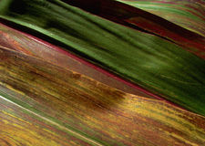 текстура 2 Стоковое Изображение