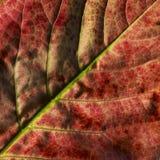 текстура 4 листьев Стоковое Изображение