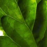 текстура 6 листьев Стоковое Изображение