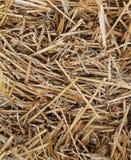 Текстура Bale сторновки Стоковое Изображение