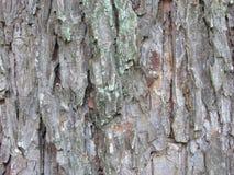 Текстура barg дерева зернистая Стоковое фото RF