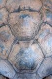 Текстура carapace черепахи стоковая фотография rf