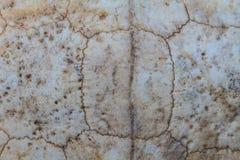 Текстура carapace черепахи стоковое фото rf