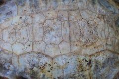 Текстура carapace черепахи стоковые изображения