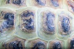 Текстура carapace черепахи стоковые изображения rf