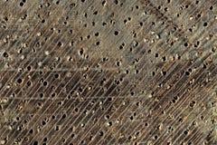 Текстура makore макроса стоковая фотография