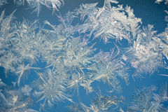 Текстура rozen окно Стоковое Изображение RF