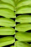текстура solomon уплотнения предпосылки s Стоковое Фото