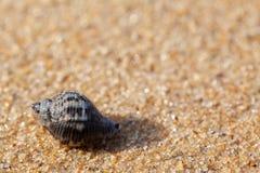 Текстурированная влажная предпосылка пляжа песка стоковые изображения rf