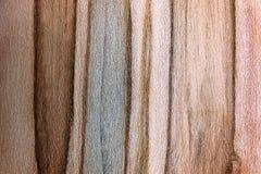 Текстурированная предпосылка темноты и светлый Striped клен амброзии сватают Стоковое Изображение