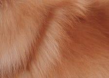 Текстурированная предпосылка волос коричневого цвета собаки Стоковая Фотография