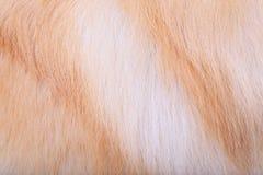 Текстурированная предпосылка волос собаки Стоковое фото RF