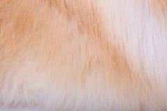 Текстурированная предпосылка волос собаки Стоковая Фотография RF