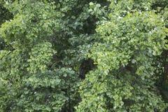 Текстурированная предпосылка - листья дерева Стоковое Изображение RF