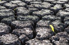 Текстурированная предпосылка сухой треснутой поверхности земли Стоковая Фотография
