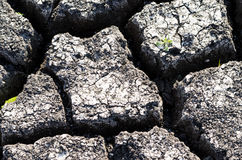 Текстурированная предпосылка сухой треснутой поверхности земли Стоковые Фотографии RF