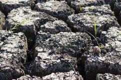 Текстурированная предпосылка сухой треснутой поверхности земли Стоковая Фотография RF