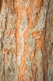 текстурированная природа предпосылок Стоковое Изображение