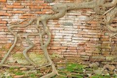 Текстурированная старая кирпичная стена Стоковые Изображения RF