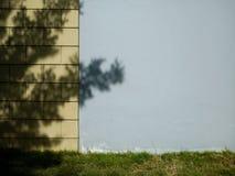 Текстурированная стена с тенью основания дерева и травы стоковые изображения rf