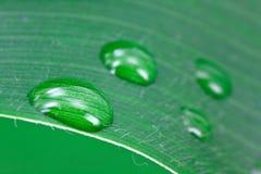 текстурированная структура листьев предпосылки большая Стоковые Фотографии RF